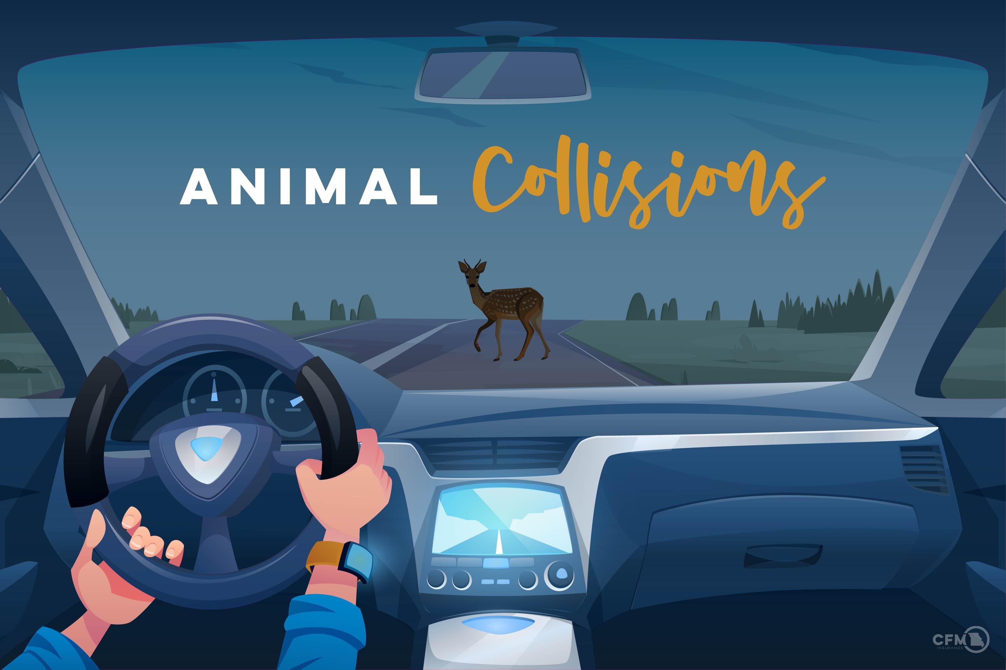 3. 4201B_Animal Collisions_Blog-01